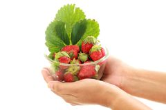 Holding bowl of fresh strawberries. Against white Royalty Free Stock Images