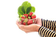 Holding bowl of fresh strawberries. Against white background Stock Photography