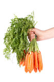 Holding a bunch of carrots Stock Photo