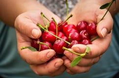 Holding cherries Stock Photography