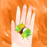 Holding chestnut in hand autumn watercolor illustration with clipping mask. Holding cute chestnut in hand, autumn hand drawn watercolor illustration for your royalty free stock photos