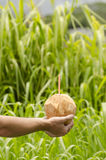 Holding a coconut drink. Hand with a coconut with an orange straw with green foliage in the background Royalty Free Stock Images