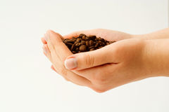 Holding coffee bean. Stock Images