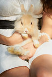 Holding cute decorative bunny sitting. Lady holding cutiest little fluffy domestic rabbit in her hands outdoors Royalty Free Stock Photography