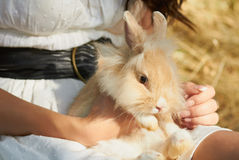 Holding cute decorative bunny sitting. Lady holding cutiest little fluffy domestic rabbit in her hands outdoors Stock Images