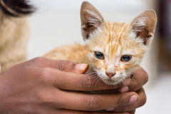 Holding cute pet cat in hands Stock Photo