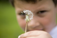 Holding a dandelion Royalty Free Stock Photo