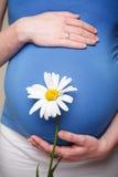 Holding der schwangeren Frau ihr Bauch und Blume Lizenzfreies Stockbild