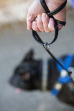 Holding a dog lead. Stock Photography
