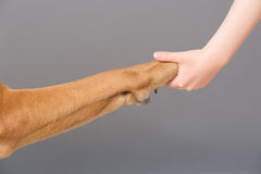 Holding dog's paw Stock Photos