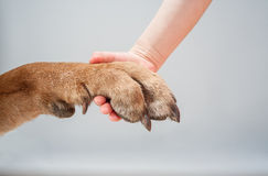 Holding dog's paw Royalty Free Stock Image