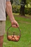 Holding egg basket. Stock Photo