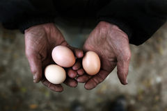 Holding eggs. A poor farmer is holding three eggs in his hands Stock Photo