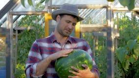 Holding A för ståendemanbonde mogen vattenmelon på växthusbakgrund på trädgården stock video