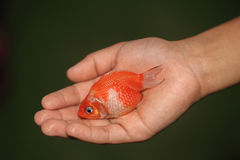 Holding Fish Royalty Free Stock Image