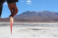 Holding a flamingo feather watching flamingos Stock Photo