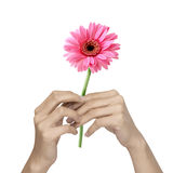 Holding flower Royalty Free Stock Images