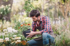 Holding flower in flowerpot while checking plants in garden. Gardener holding flower in flowerpot while checking plants in garden royalty free stock photos