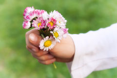 Holding flowers Stock Photography