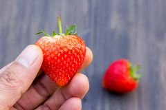 Holding fresh strawberry in hands. Close up holding fresh strawberry in hands with strawberry blur background on wood table Royalty Free Stock Photography