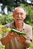 Holding fresh zucchini Stock Photos
