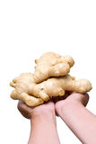 Holding ginger royalty free stock images