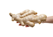 Holding ginger root isolated on white background Royalty Free Stock Images