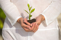 Holding green plant in hand Stock Image