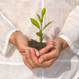 Holding green plant in hand Stock Photography