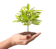 Holding green plant in hand Royalty Free Stock Images