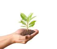 Holding green plant in hand Royalty Free Stock Image