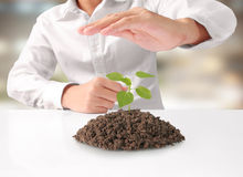 Holding green plant in hand Royalty Free Stock Photos