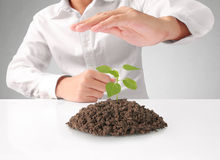 Holding green plant in hand Royalty Free Stock Photo