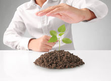 Holding green plant in hand Stock Images