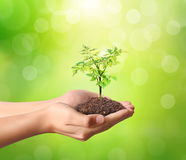 Holding green plant in hand Royalty Free Stock Photography