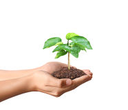 Holding green plant in hand Stock Photo
