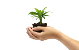 Holding green plant in the hand Royalty Free Stock Images