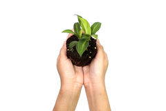 Holding green plant in the hand Stock Photo