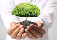 Holding green tree in hand Royalty Free Stock Photo