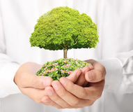 Holding green tree in hand Stock Images