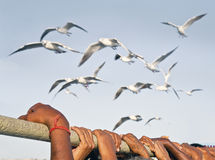 Holding on while gulls make fly past Stock Photography