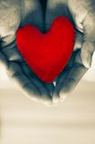 Holding Heart. In Cupped Hands Stock Photo