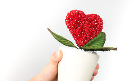 Holding heart flower pot environmental care concept. royalty free stock images