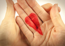 Holding A Heart Royalty Free Stock Photography