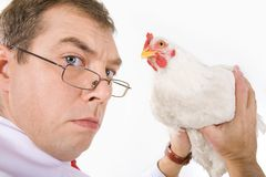 Holding hen Stock Image