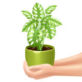 Holding A Houseplant Illustration Stock Image