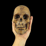 Holding human skull in hand. Conceptual image.( Shakespeare's Hamlet scene concept ) Royalty Free Stock Photo
