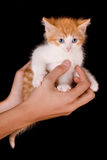 Holding a kitten Royalty Free Stock Photography
