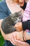 Holding kitten Stock Photography