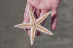 Holding A Live Starfish stock photos